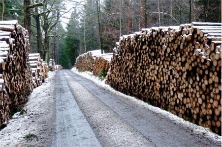 Holzstapel an der Wildwiese
