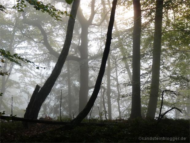 Nebel überm Polenztal