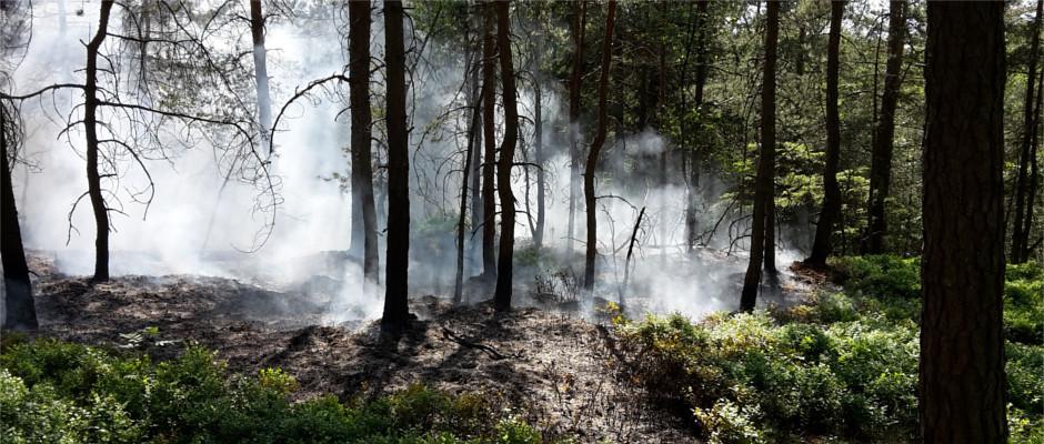 Waldbrand in einem Riffwäldchen