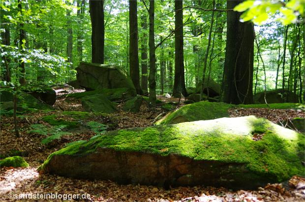 Sonnenlicht im Unterholz