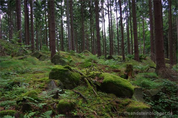 Waldboden voller Felsblöcke