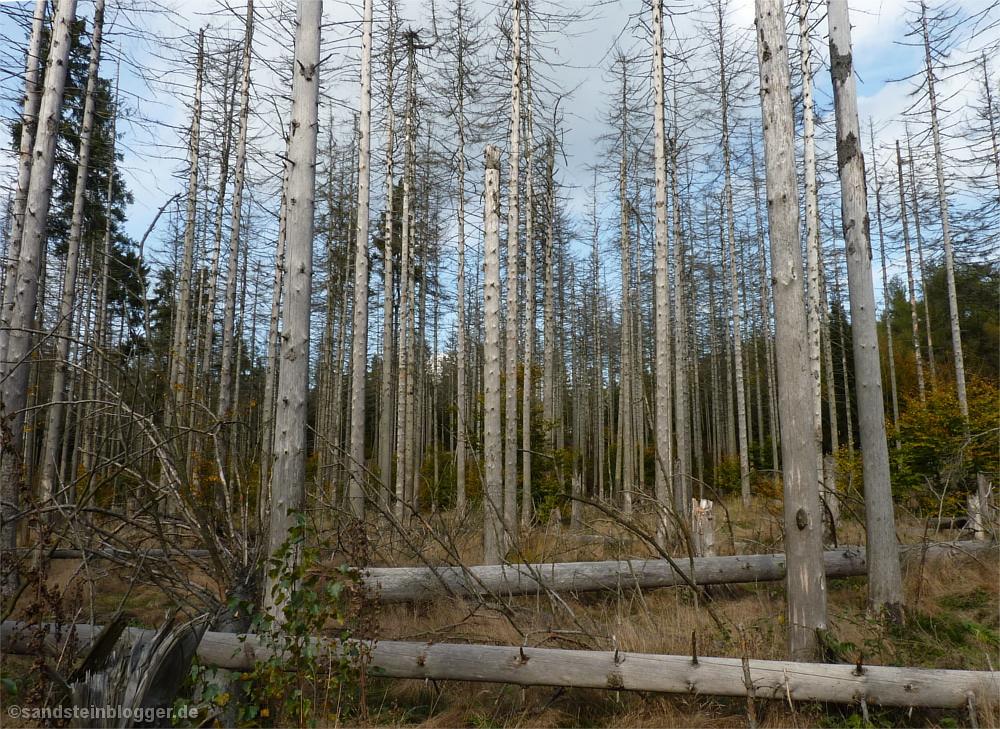 Borkenkäferwald am Reitsteig