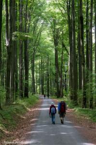 Wanderer im Nationalpark