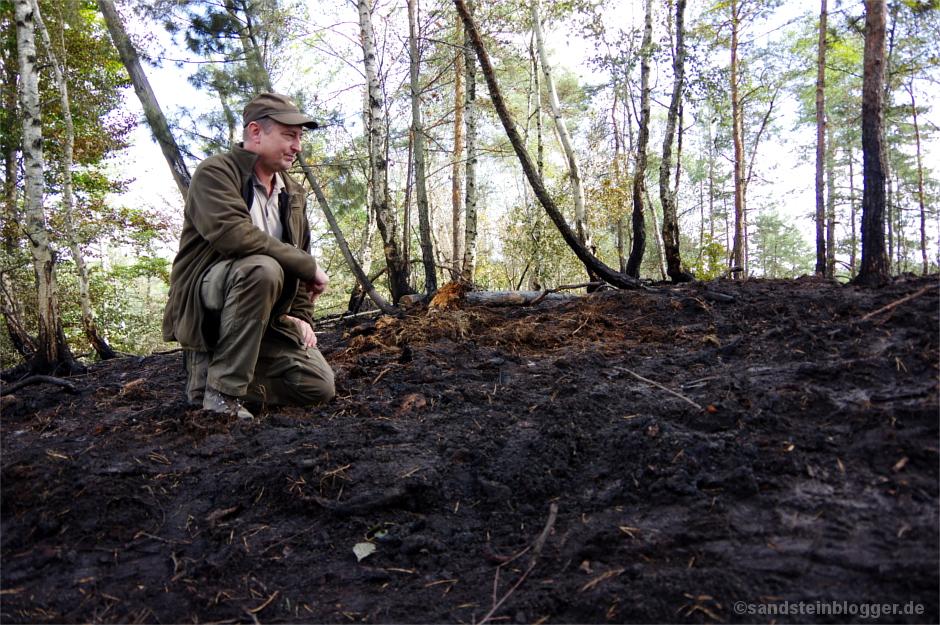 Ranger hockt auf der Waldbrandfläche