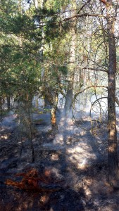 Verbrannte Bodenvegetation