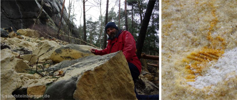 Nach dem Felssturz am Rauenstein kann man dort jetzt Muscheln suchen.
