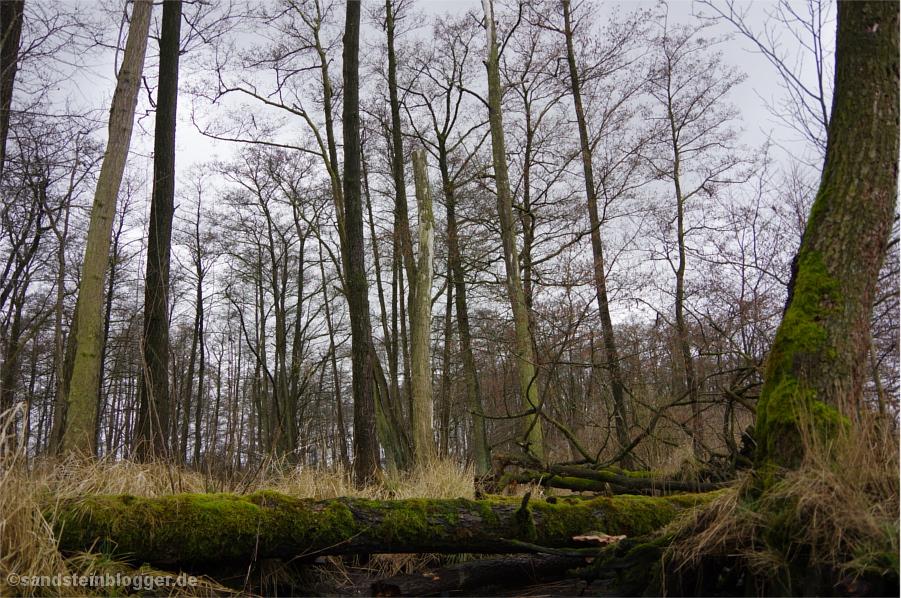 Urwald an der Peene