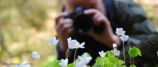 Kleeblüten im Polenztal