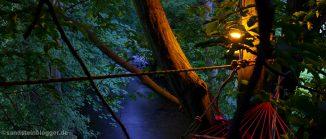 Licht in der Baumkrone