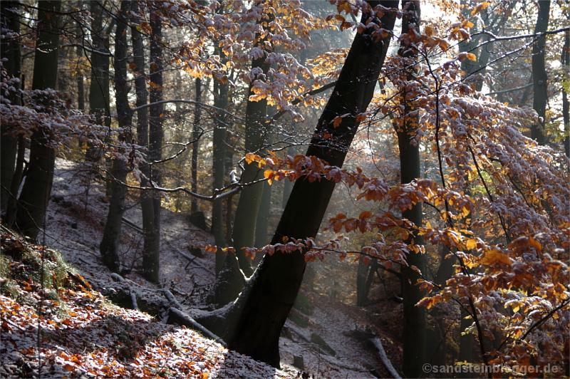 Schnee im Wald am Lilienstein