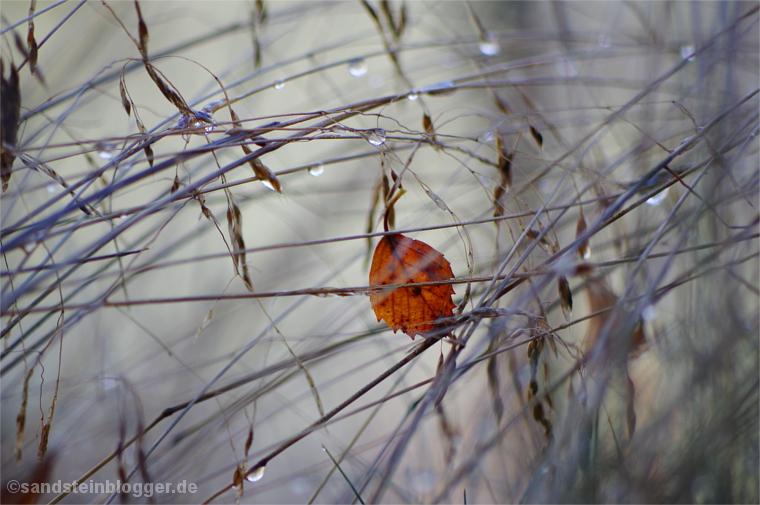 Regen im Gras