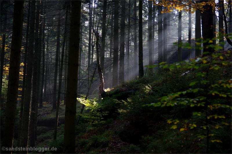 Sonnenstrahl im dunklen Wald