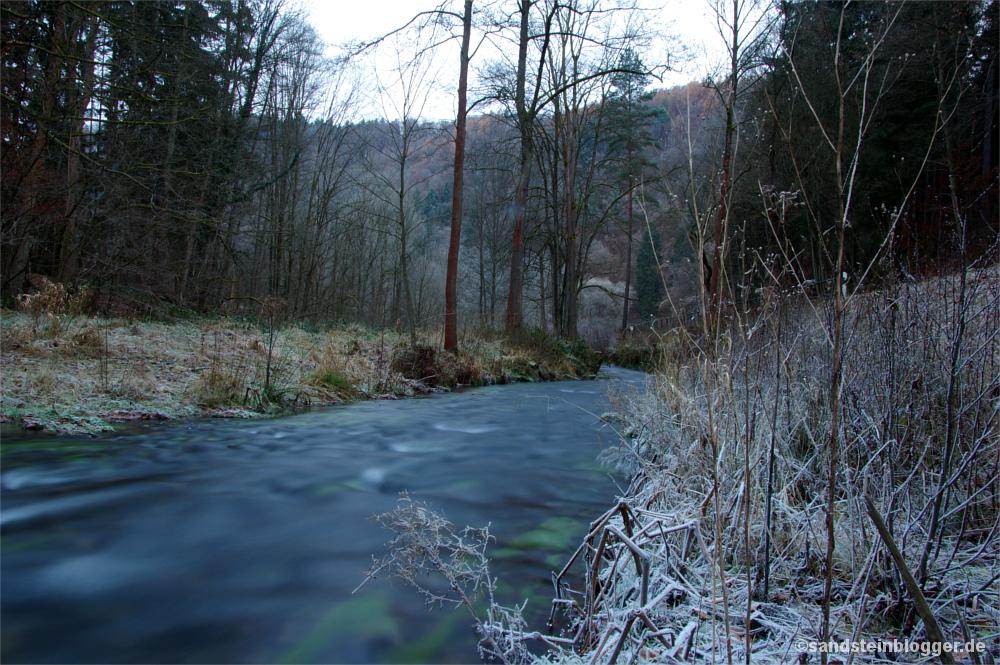 Raureif auf Gräsern am Ufer des Kirnitzsch-Bachs