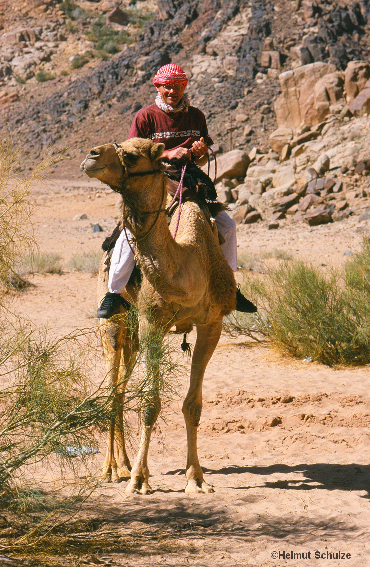 Mann in der Wüste auf Kamel, Bernd Arnold im Wadi Rum