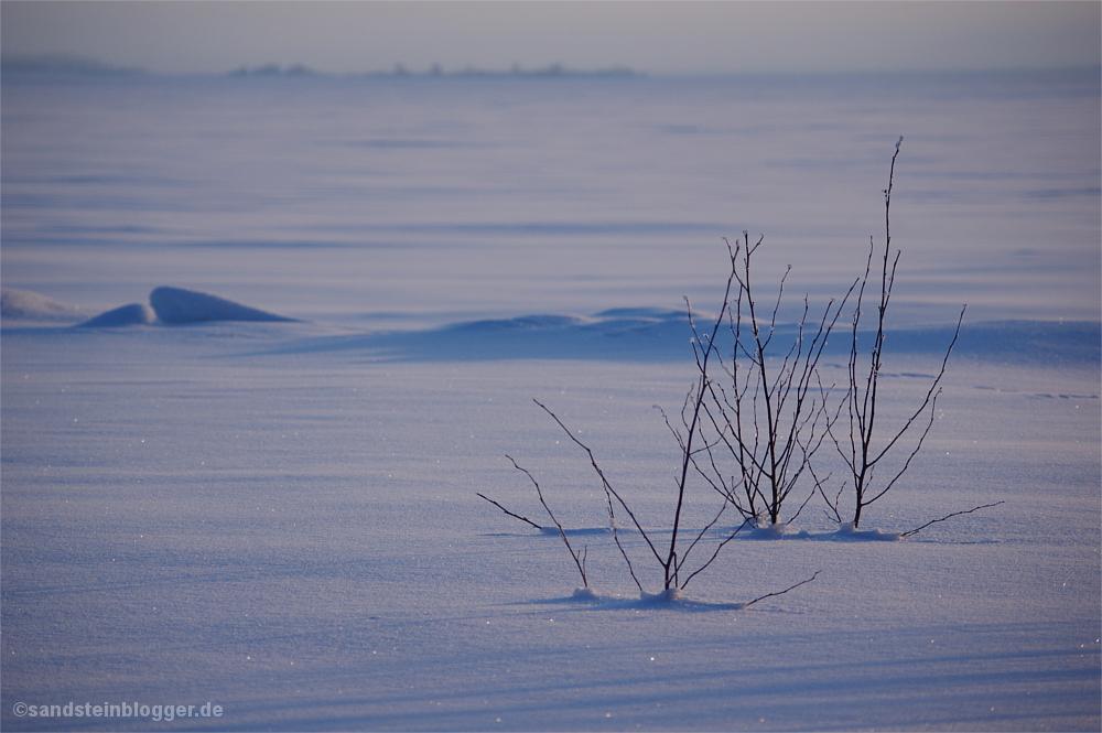 Junge Bäumchen im Schnee.