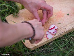 Hände, die Radieschen schneiden