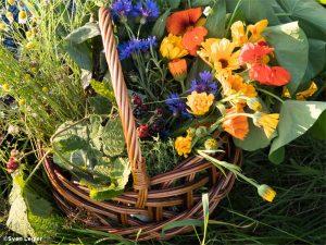 Korb voll Blumen