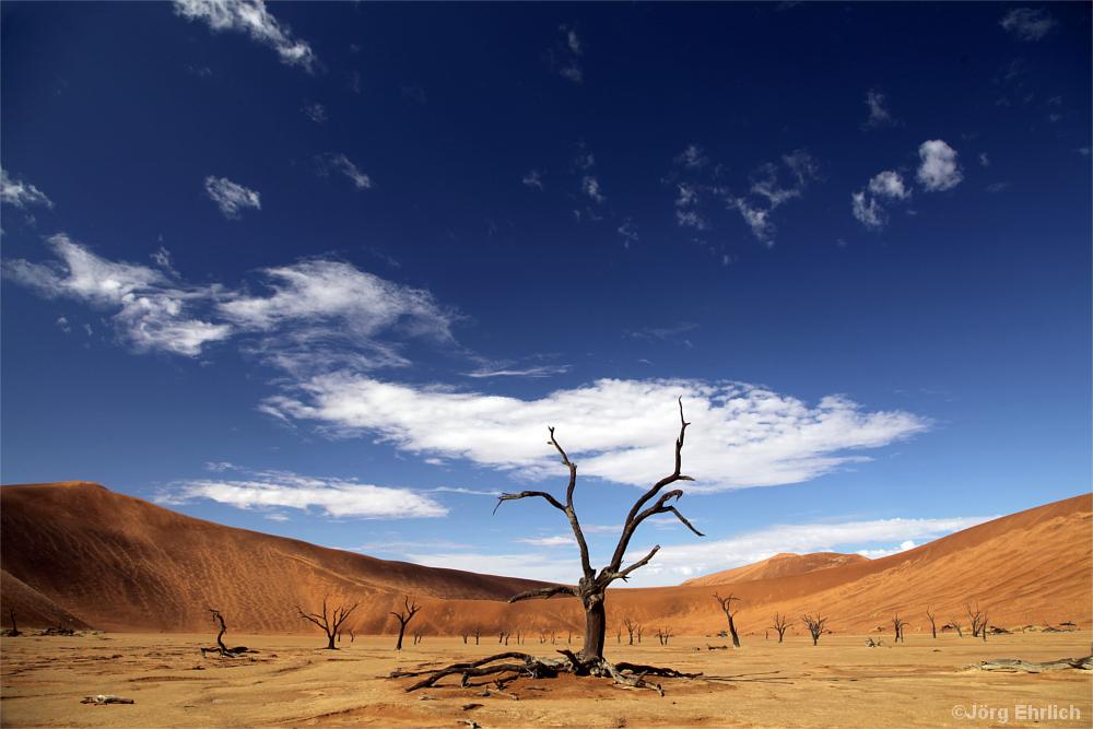 Wüste mit toten Bäumen
