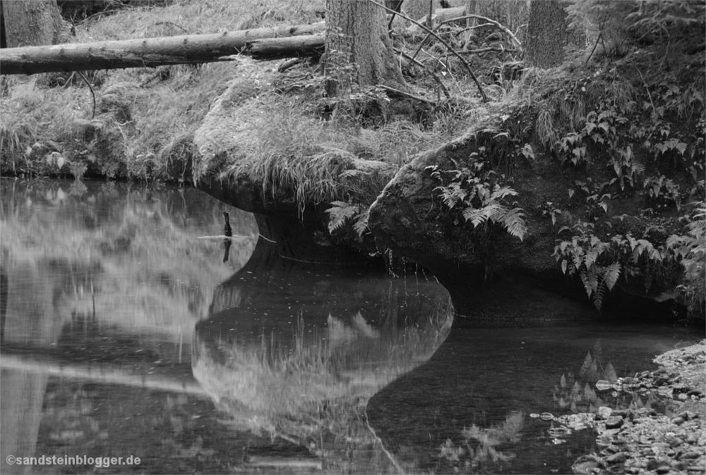 Bach, Ufer spiegelt sich im Wasser