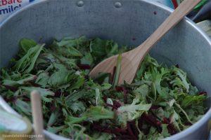Blattsalate in einem Alutopf