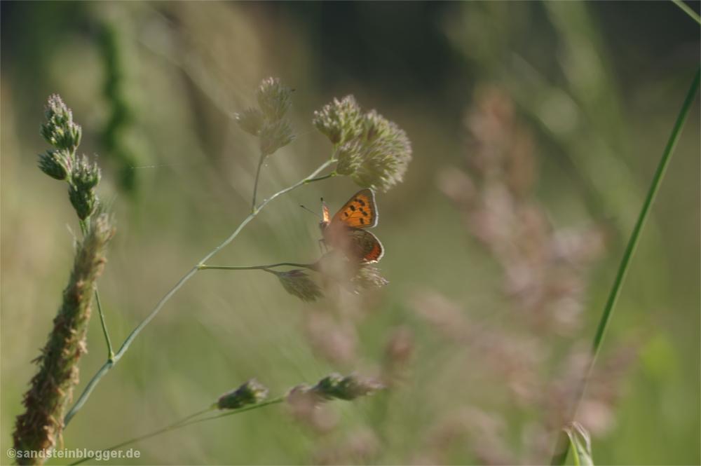 Schmetterling zwischen Gräsern