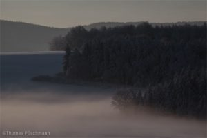 Verschneiter Wald Nahaufnahme