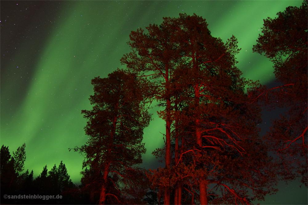 Polarlichter über den Baumwipfeln