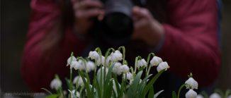 Märzenbecher, dahinter eine Fotografin