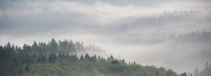 Morgennebel über dem Wald