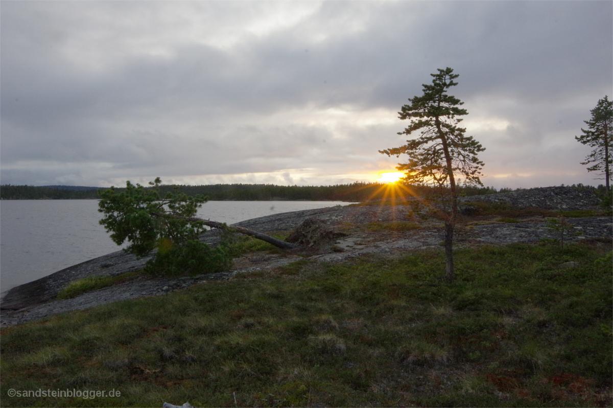 Sonnenuntergang hinter zwei einsamen Bäumen