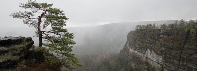 Einsame Kiefer auf einem Felsriff, dahinter Nebel und Regenwolken