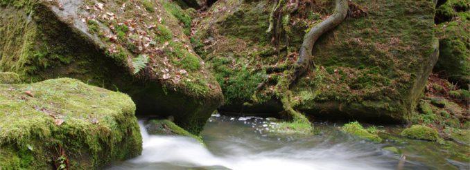 Ein Gebirgsbach schäumt und sprudelt zwischen moosgrünen Blöcken hindurch.
