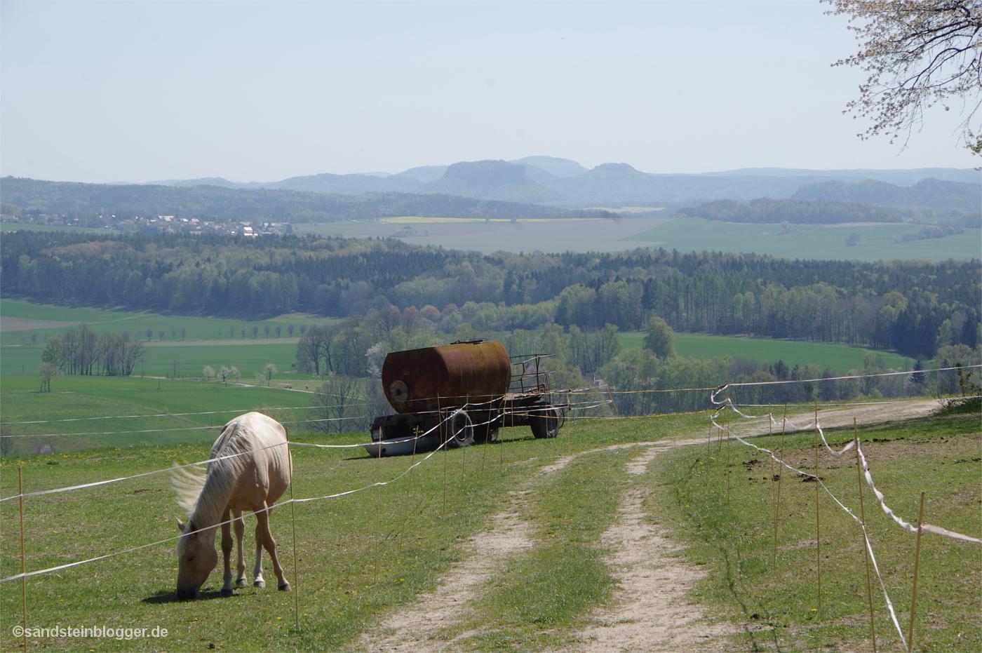 Weite Wiesen, Elektrozäune, im Vordergrund grast ein Pferd