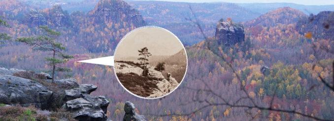 Kiefernbäumchen vor Felslandschaft